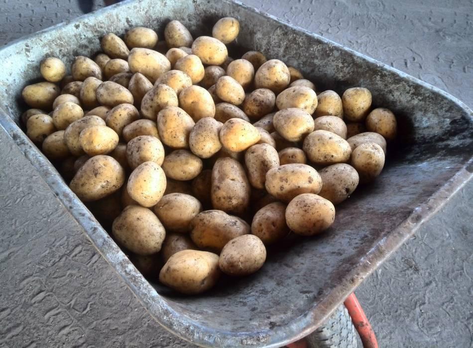 Для тех, кто выбирает качественный картофель
